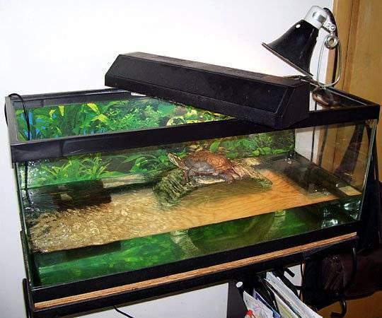 Красноухая черепаха в аквариуме сколько нужно воды