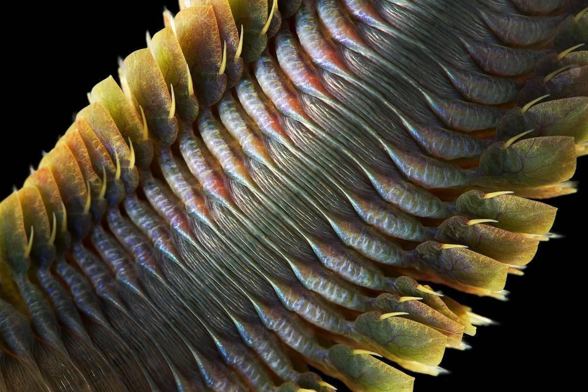 Морские черви нереисы: описание, питание и размножение червей