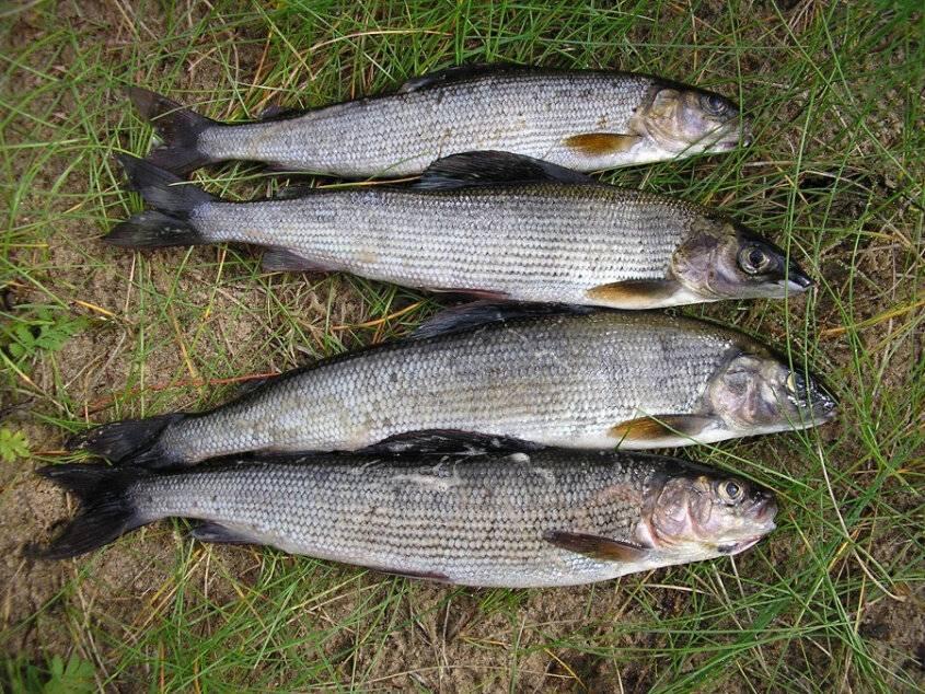 Рыбалка в городе минск