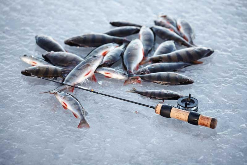 Зимний спиннинг для начинающих - читайте на сatcher.fish