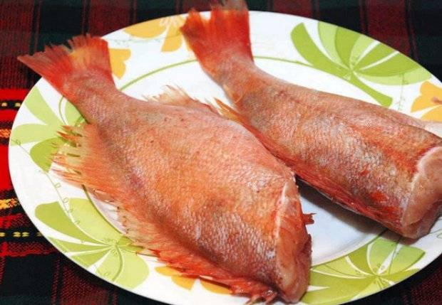 Описание и характеристика морского окуня, его польза и вред для питания человека