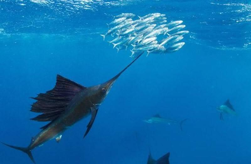 Может ли рыба утонуть?   природа   общество