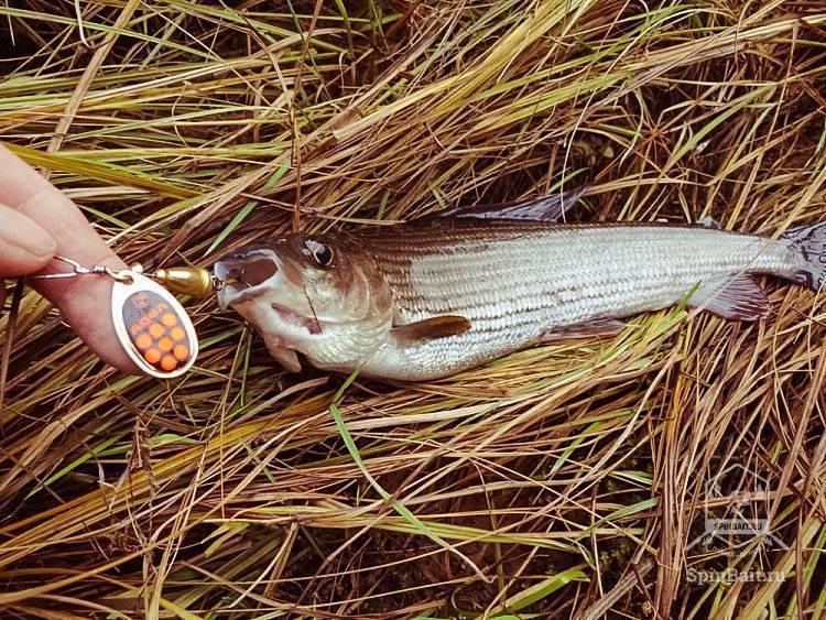 Рыбалка на хариуса в красноярском крае