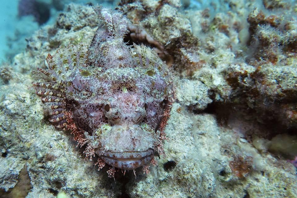 Самые ядовитые рыбы в мире - топ-8 с фото