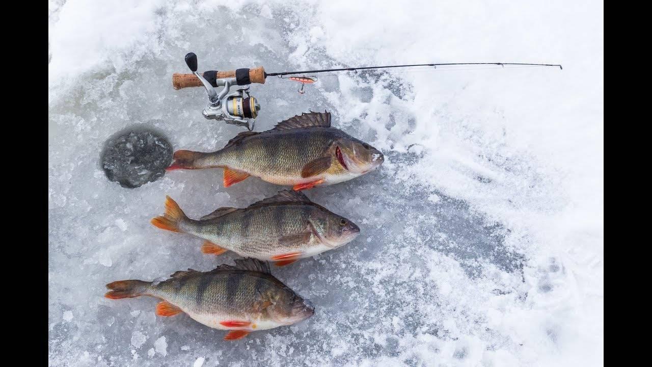 Рыбалка в глухозимье: советы бывалого рыбака