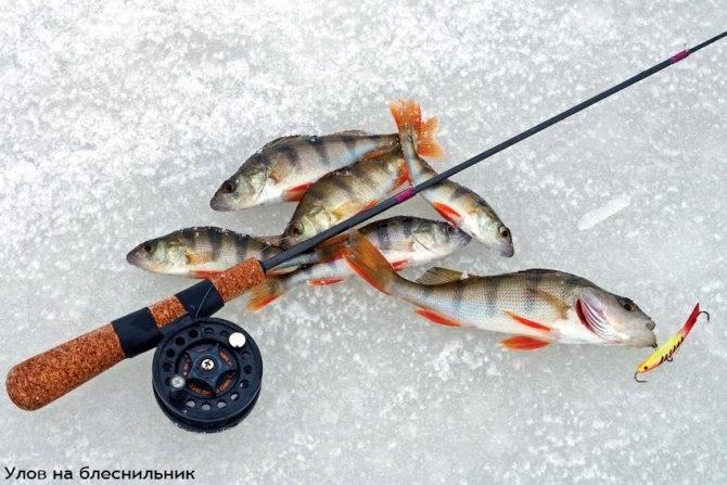 Как заядлые рыбаки ловля хариуса зимой: где искать и на что ловить хищника?