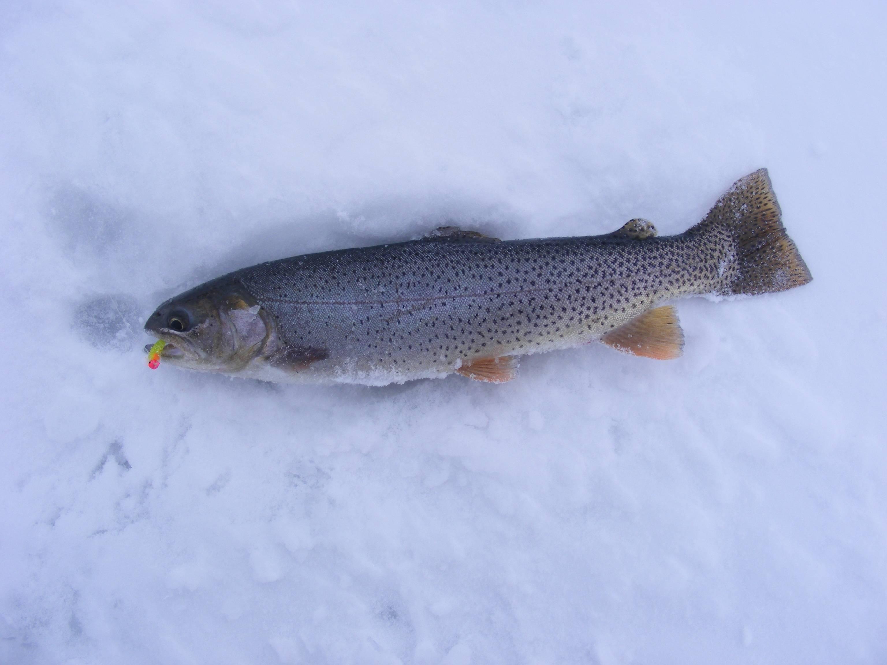 ✅ прогноз клева хариуса в красноярске на 5 - danafish.ru