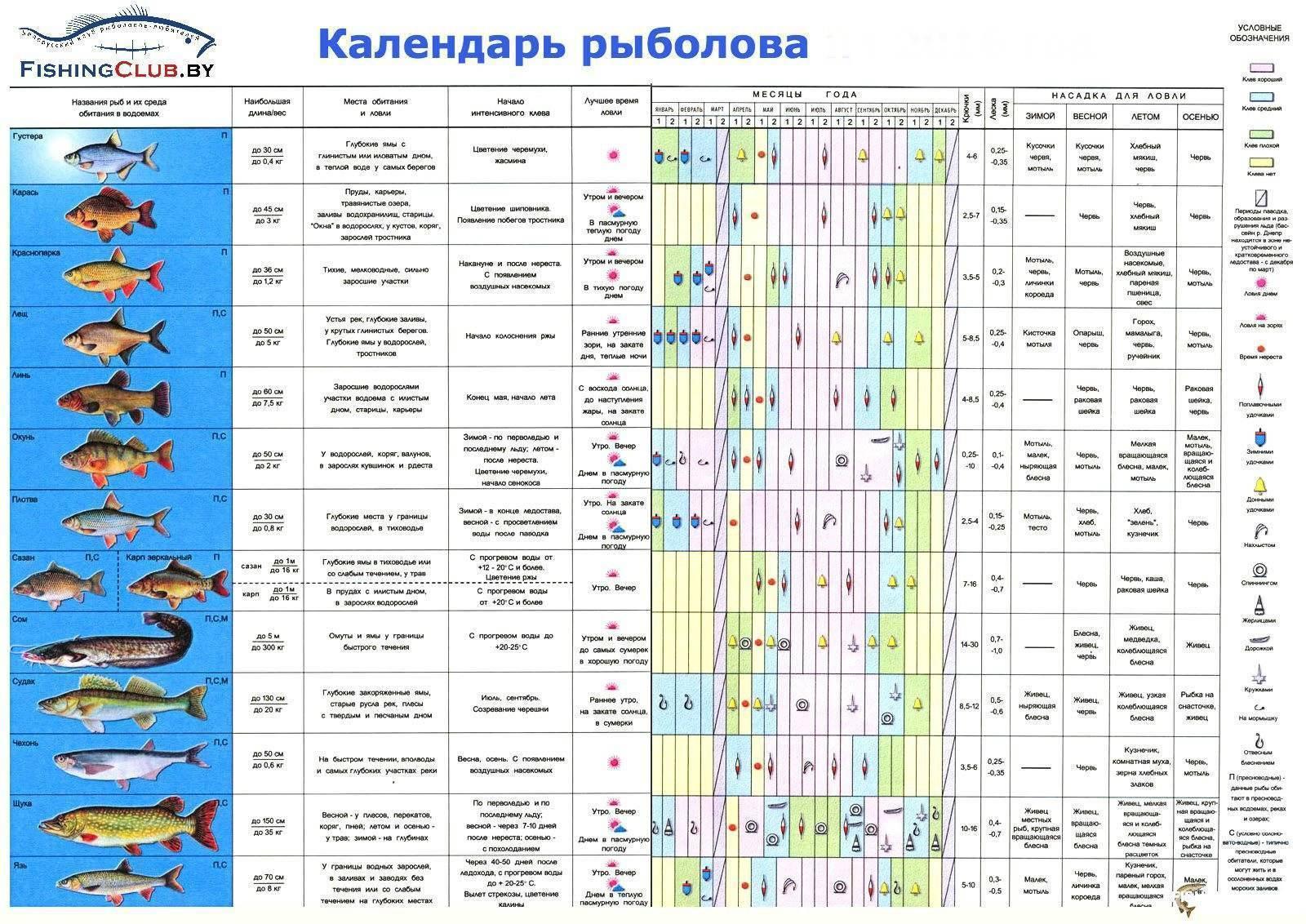 Весенняя рыбалка на нижней волге и ахтубе: в марте, апреле и мае