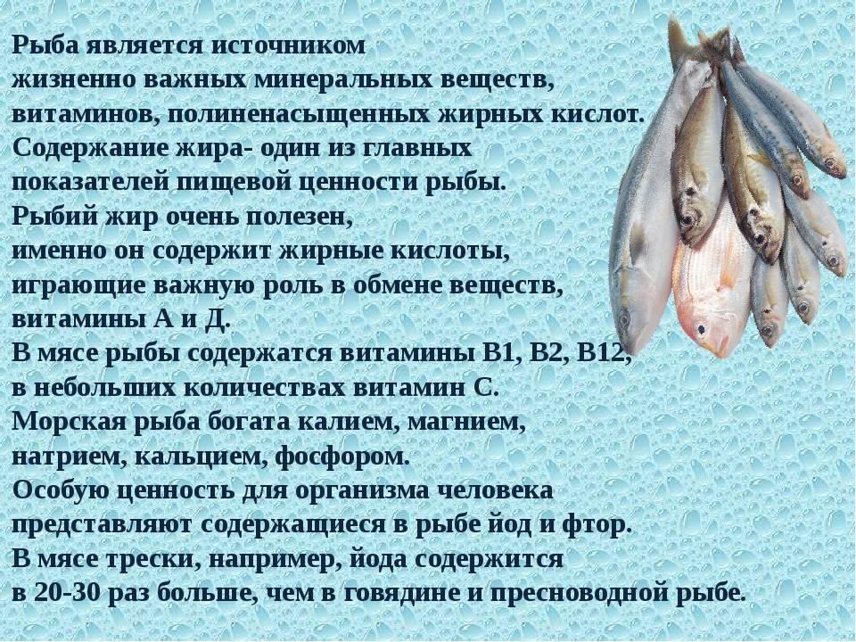 Рыба навага — чем полезна и чем вредна