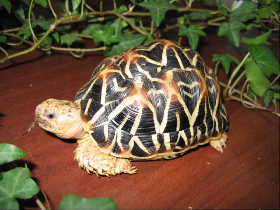 Какую черепаху лучше завести дома для ребенка, как правильно выбрать