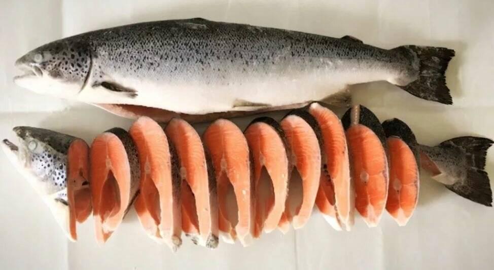 Чем горбуша отличается от кеты, лосося, нерки и кижуча? какая рыба вкуснее и полезней? кижуч, кета или горбуша, что выбрать