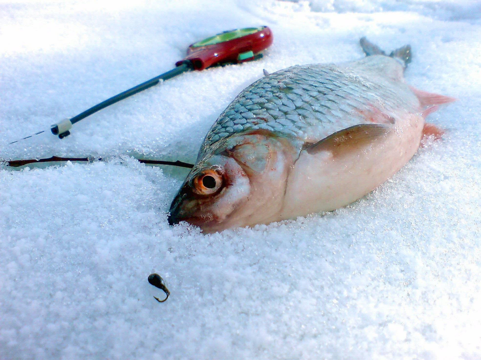 Ловля зимой на безмотылку
