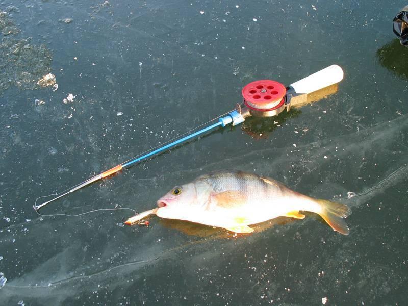 Ловля окуня на балансир со льда - снасти, тактика и техника проводки