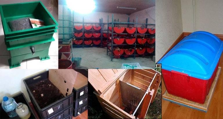 Черви для рыбалки: как разводить в домашних условиях и содержать