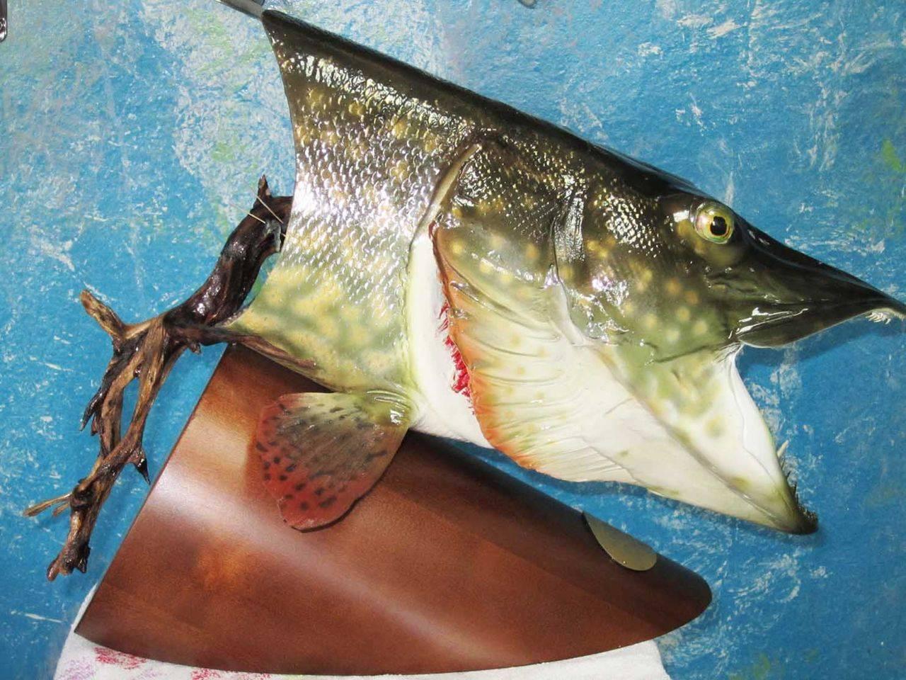 Как сделать:: сохранить рыболовный трофей