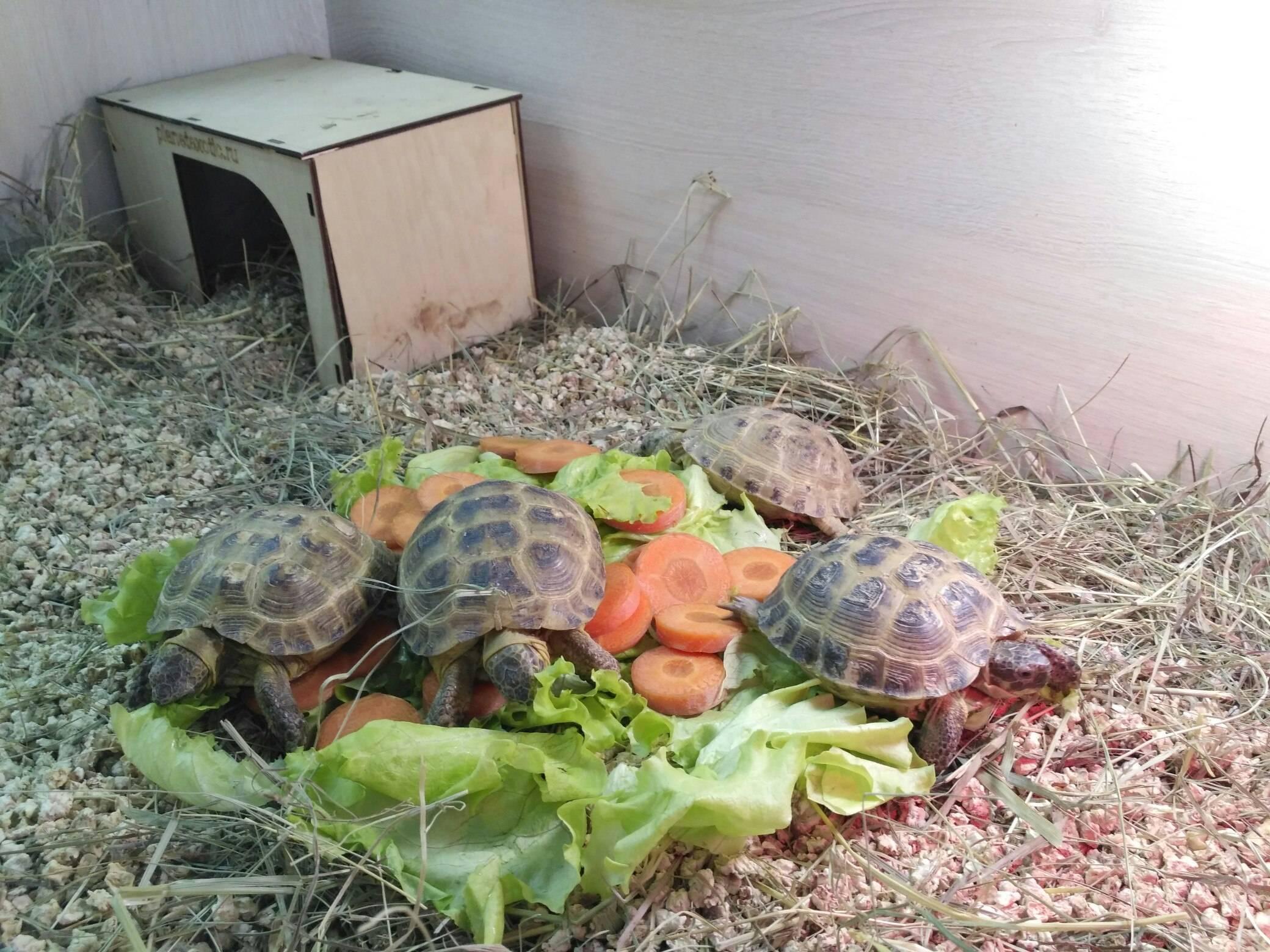 Как выбрать черепаху для содержания в домашних условиях