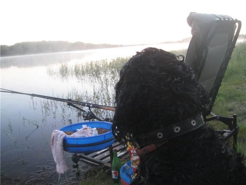 Места для рыбалки в новгородской области – платная и бесплатная рыбалка!