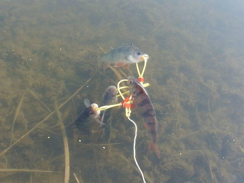 Осенняя рыбалка наокуня
