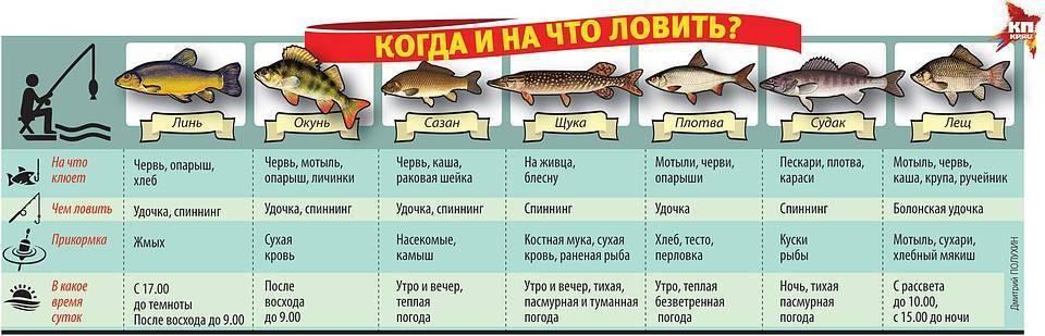 Летняя рыбалка: ловля летом в августе, конце июля и в июне. какая рыба клюет и что нужно начинающему рыбаку? в какое время лучше рыбачить?