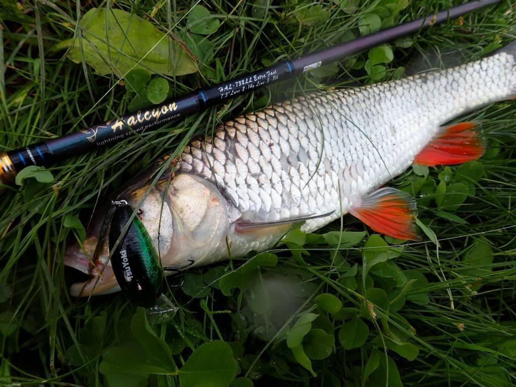 Как ловить голавля на поплавочную снасть (часть вторая) - читайте на сatcher.fish