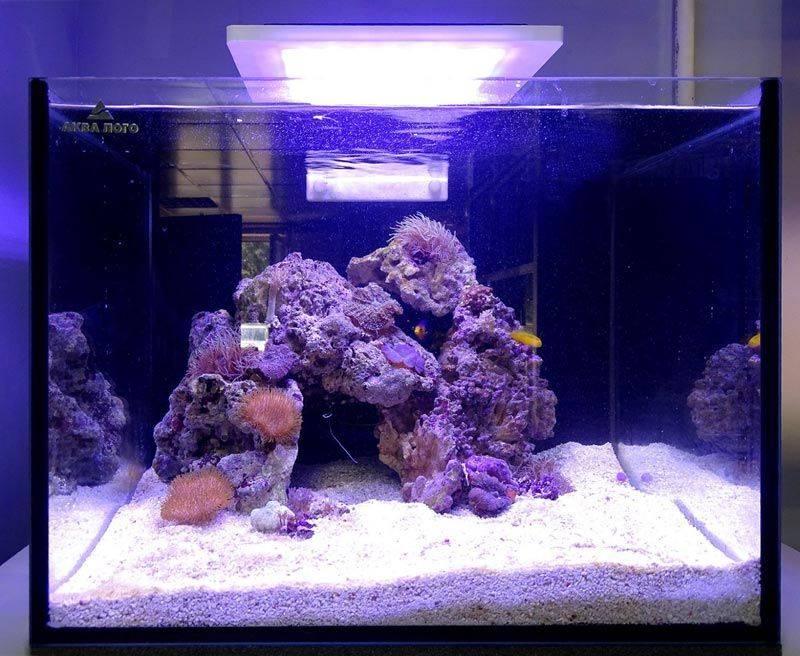Морской аквариум • блог аквариумиста