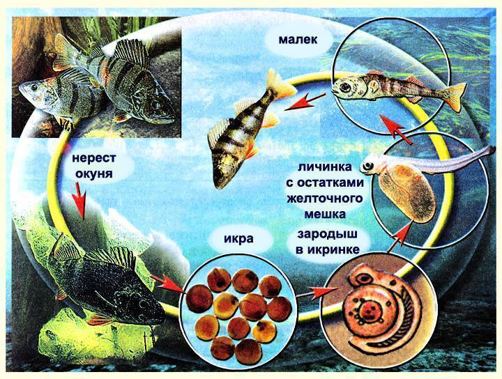 Влияние температуры воды на жизнедеятельность рыб