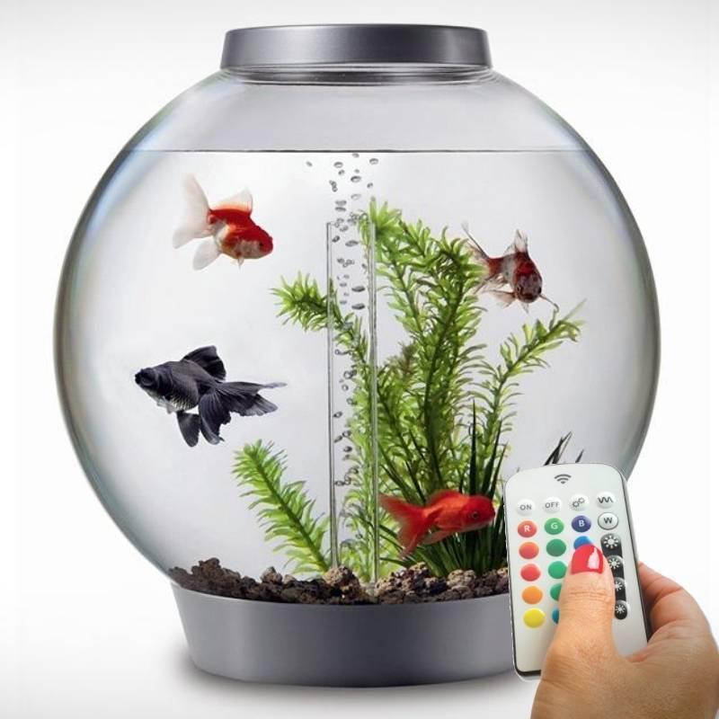 Как запустить аквариум с растениями?