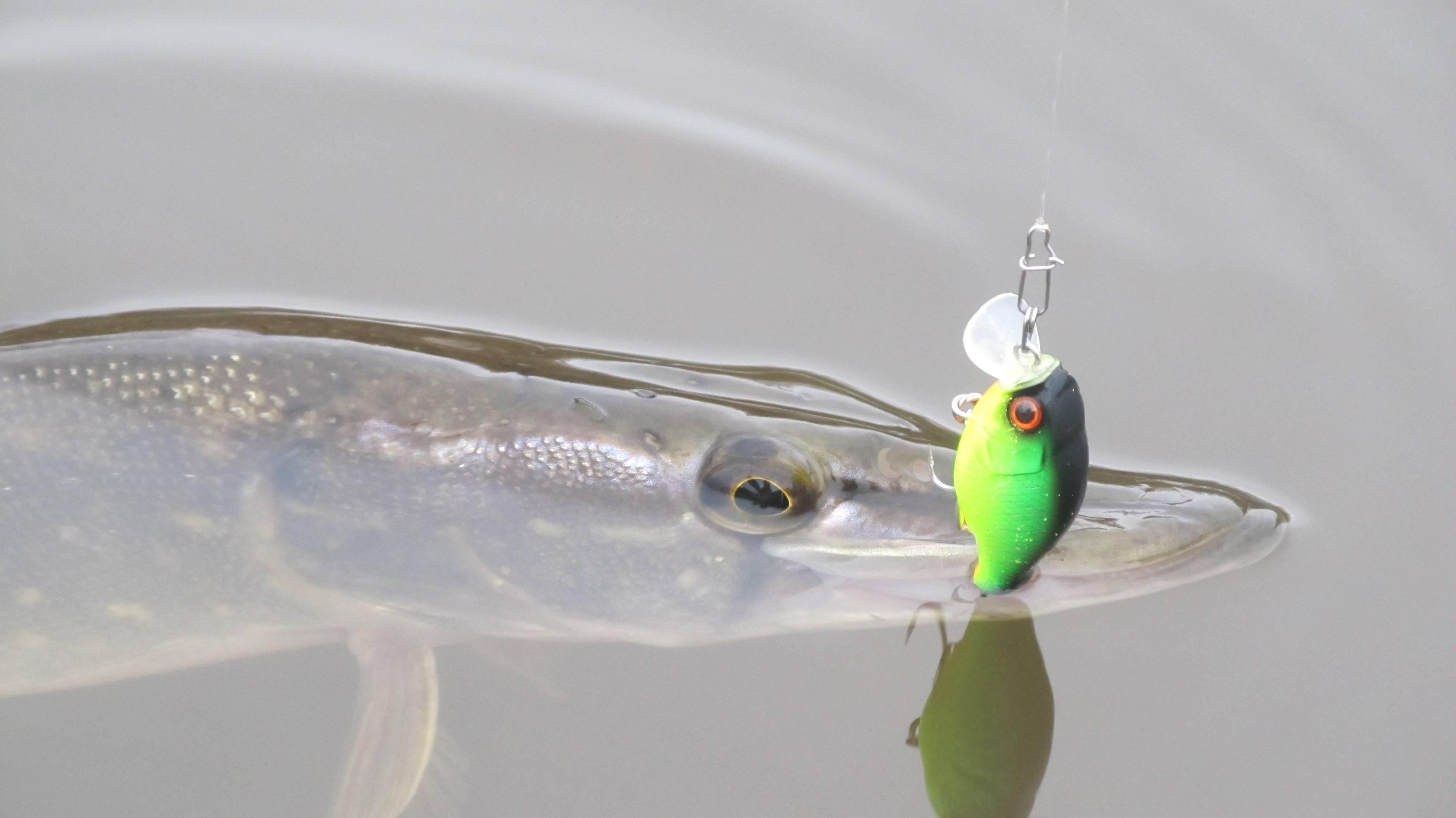 Лучшие воблеры для троллинга – топ 10 – суперулов – интернет-портал о рыбалке