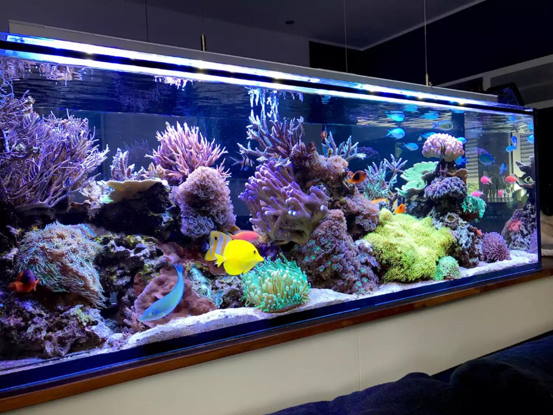 Морской аквариум – окно в удивительный подводный мир