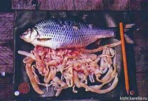 Список рыб, болеющих описторхозом