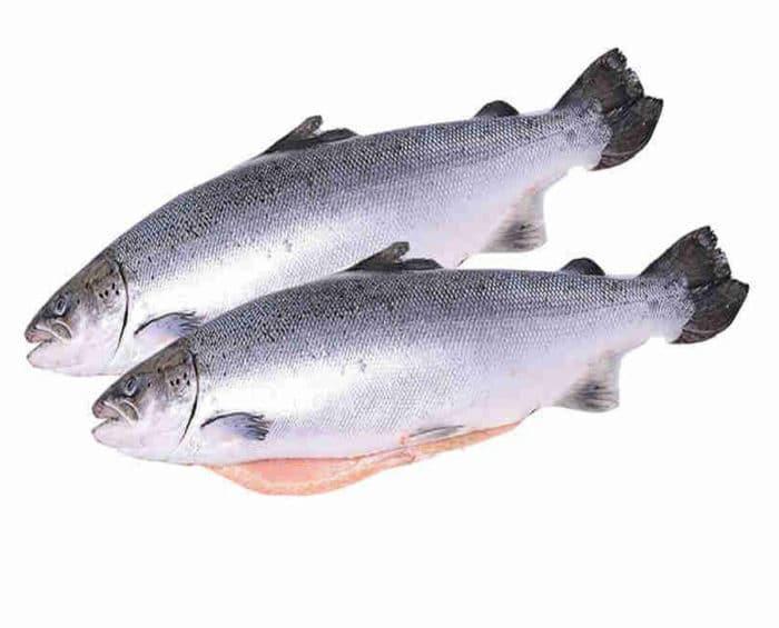 Что за рыба – кета?