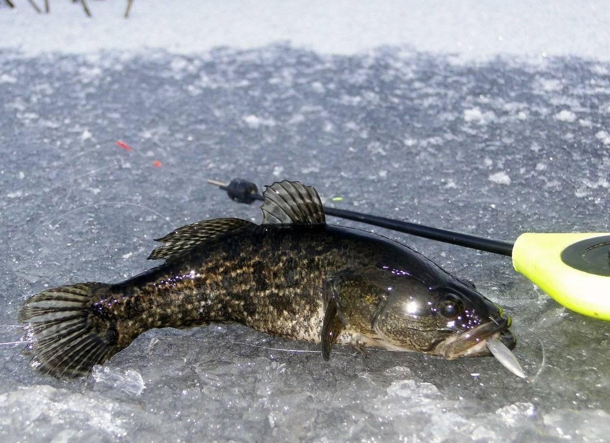 Ловля ротана зимой: на мормышку с насадкой