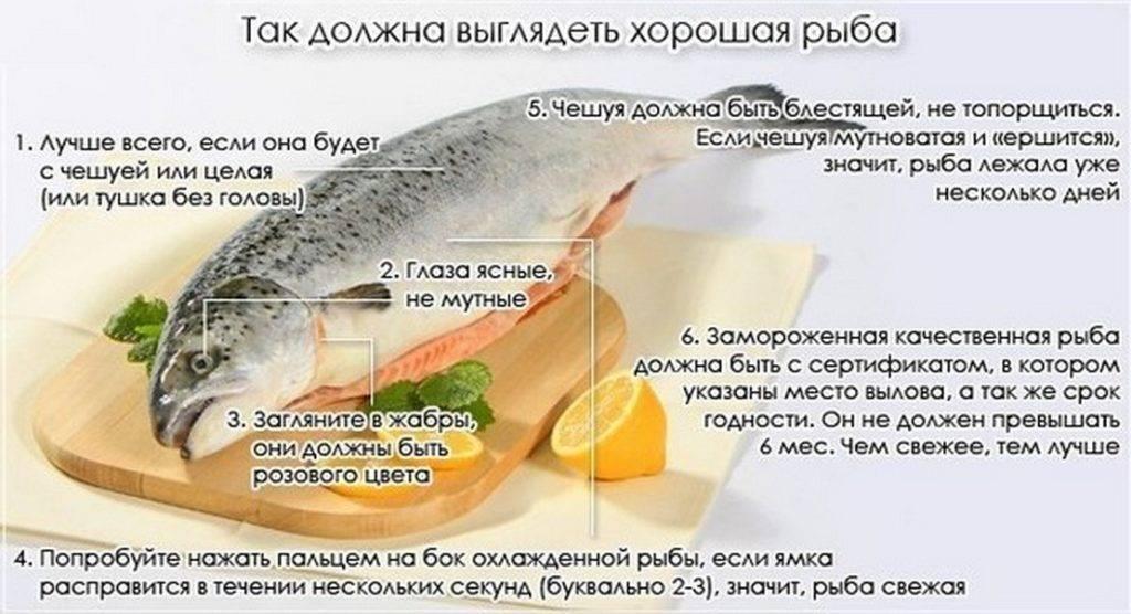 Самые свежие факты про рыбу судак