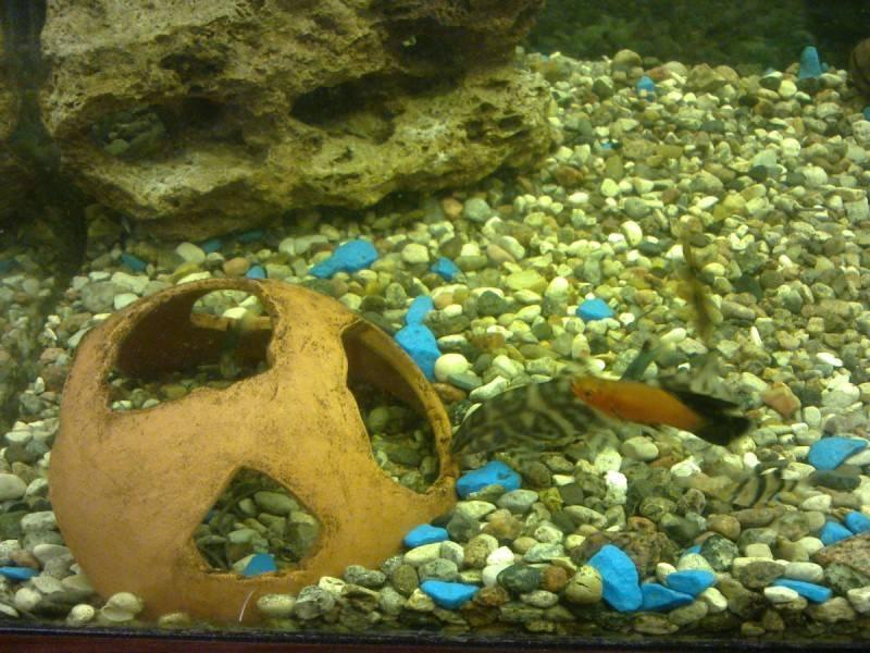 Оформление аквариума: 7 стилей и множество оригинальных идей