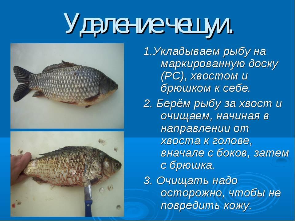 Все о рыбах с красными плавниками
