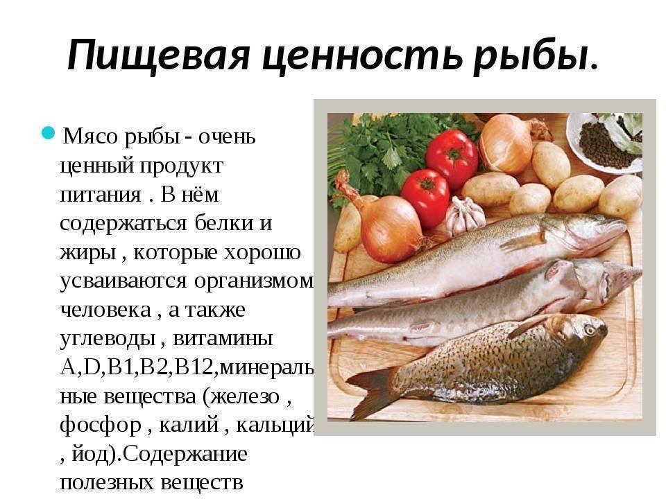 Навага жареная калорийность на 100 грамм. пищевая ценность и полезные свойства наваги. с чем сочетается навага