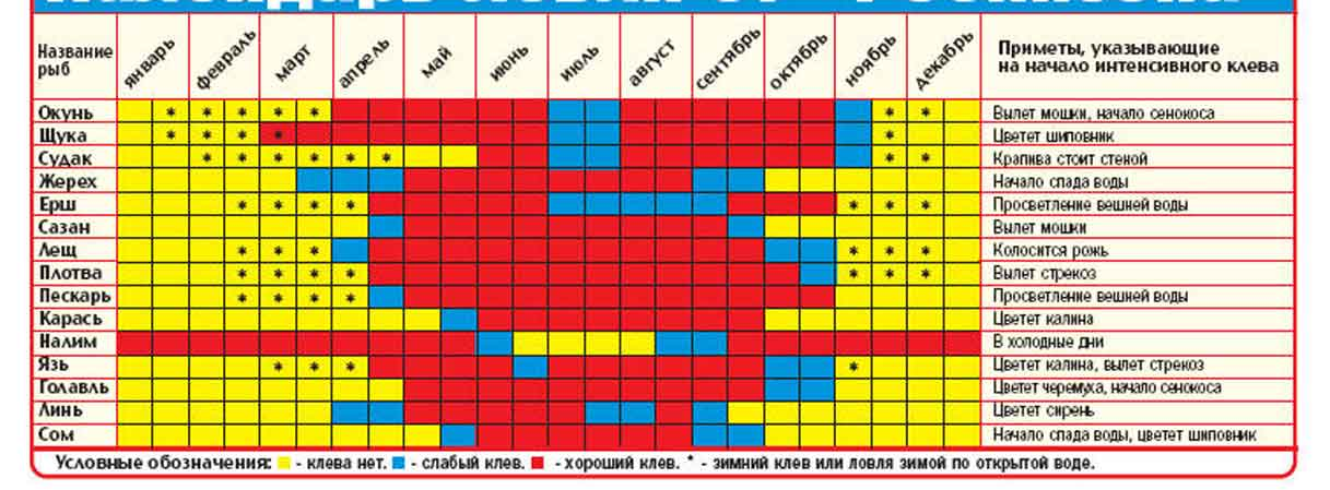 Нерест окуня: условия, места, время и особенности