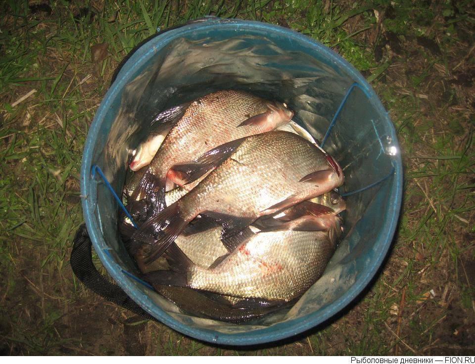 Рыбалка в шатуре, шатурском районе московской области на озере святое, муромское, белое, платно, бесплатно: отчёты, отзывы, прогноз клева