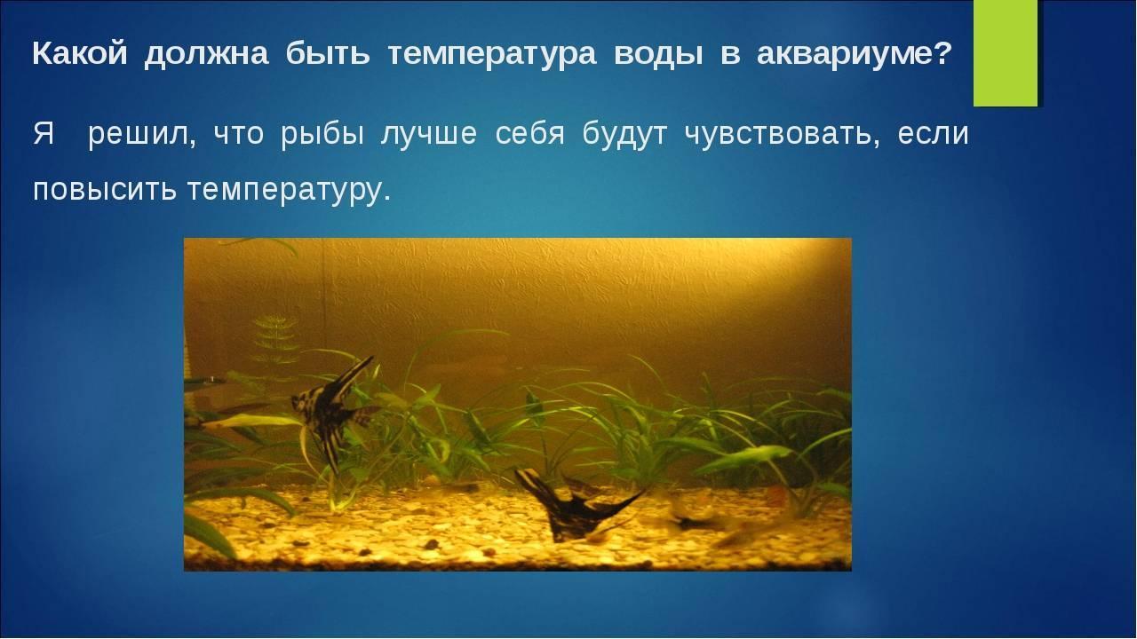 Температурный режим для рыбок в аквариуме