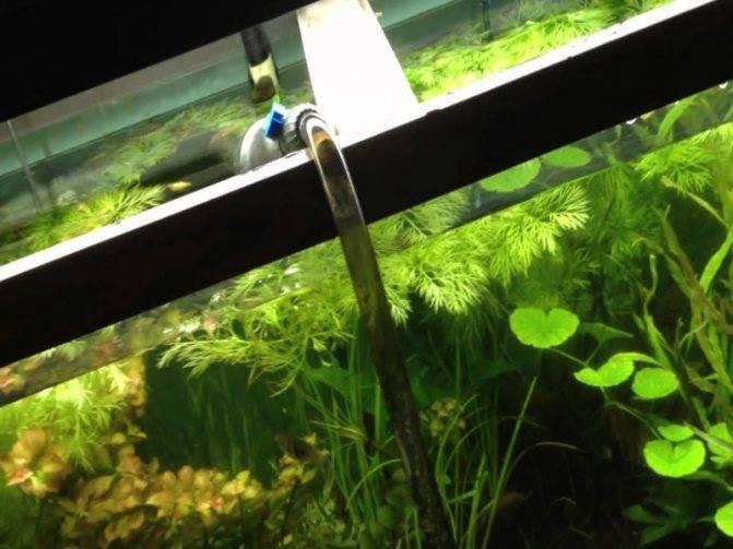 Почему в аквариуме мутнеет вода: советы,как бороться