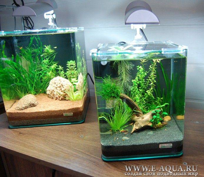 План запуска аквариума для новичка или мой первый аквариум