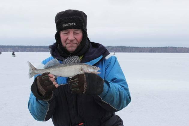 Как ловить судака: рыбалка различными методами