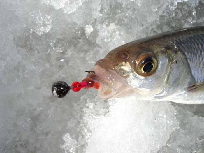 Зимняя ловля чебака - где искать и на что ловить?
