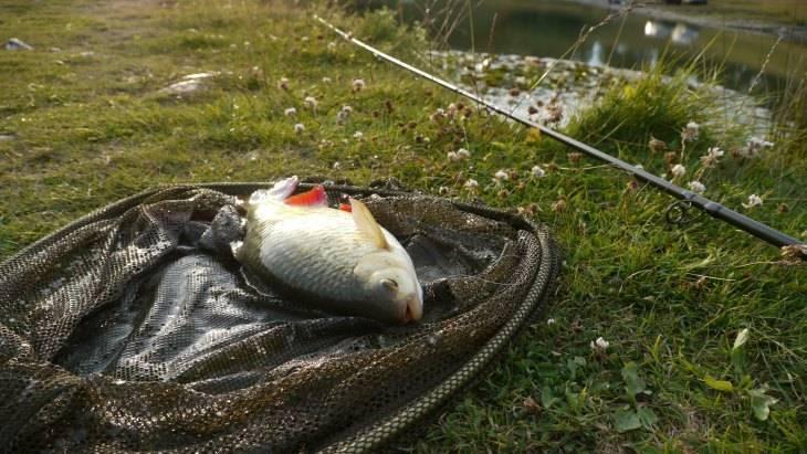 Как поймать рыбу без удочки: проверенные способы ловли. способы ловли рыбы