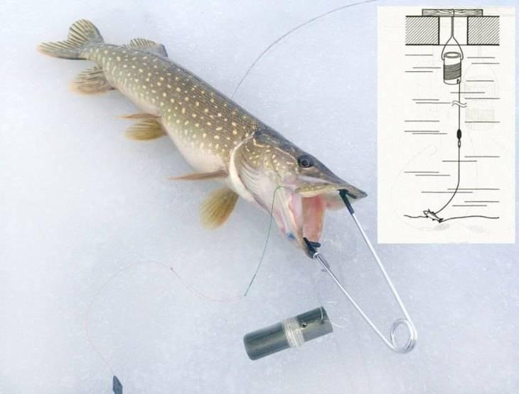 Рыбалка на судака. ловля судака на мертвую рыбку и ее кусочки...