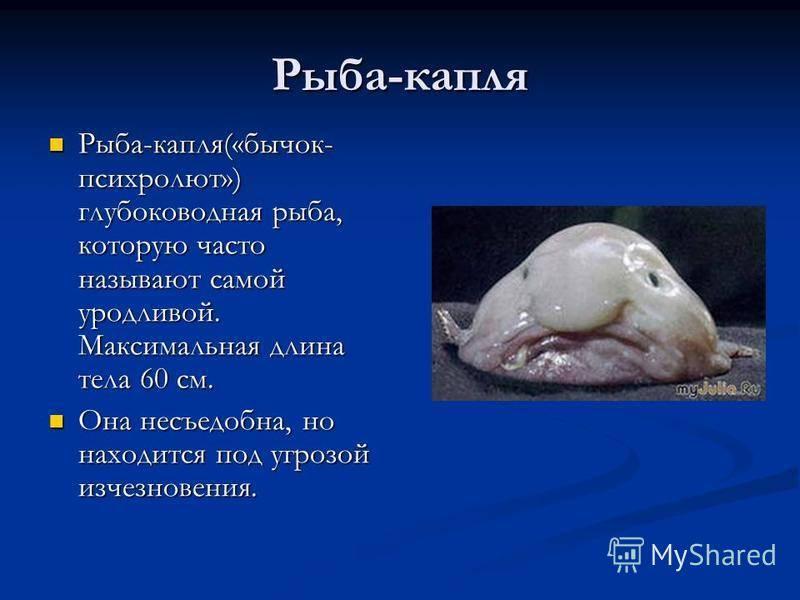 Птица скопа: как выглядит, где обитаем, чем питается и интересные факты (фото)