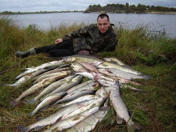 Рыбалка в брестской области: обзор рыбных мест, виды рыбы