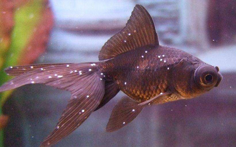Причины гибели аквариумных рыбок