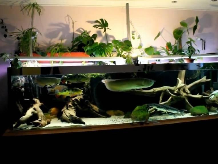 4ivasregal › блог › заметки аквариумиста. ч.2. делаем фитофильтр.
