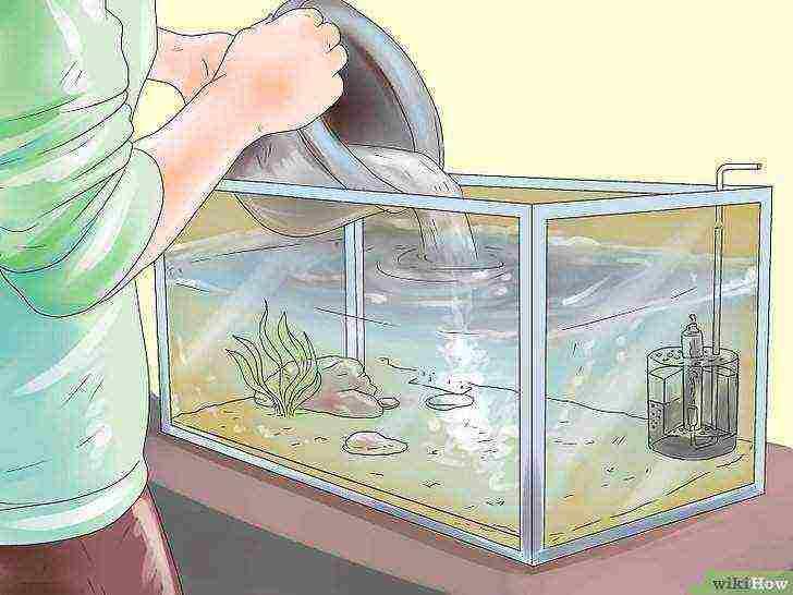 Сколько нужно отстаивать воду для аквариума?